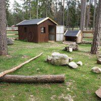 Gotlands Djurpark Belgisk Jätte