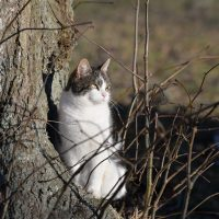 Gotlands Djurpark Katt