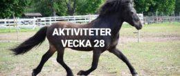 AKTIVITETER VECKA 28