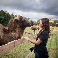 Gotlands Djurpark Kamel