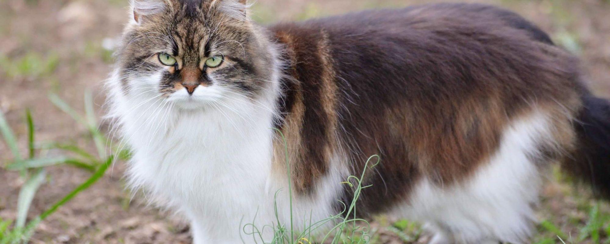 gotlands-djurpark-eskelhem-katt-9