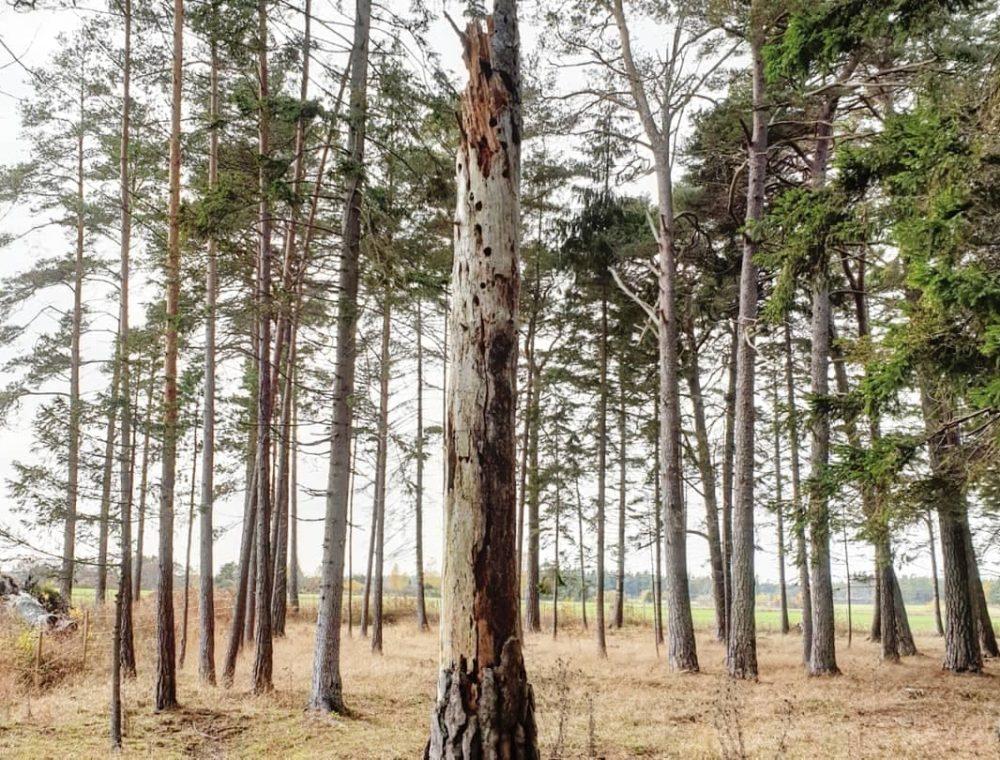 GotlandsDjurpark-Gotland-Eskelhem-Trollskog